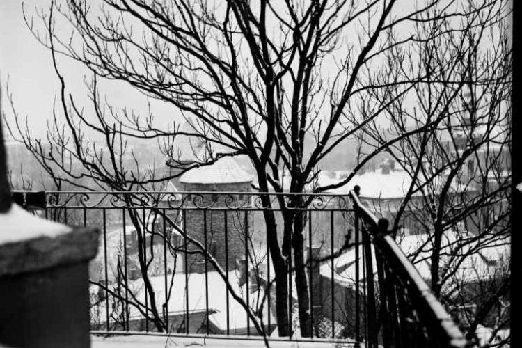 Dead Tree Lawsuit Against HOA Arborist Dismissed